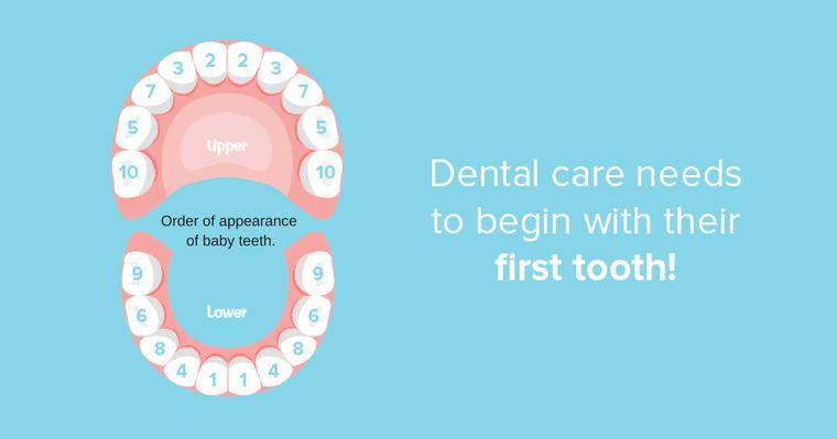 Healthy baby teeth will grow into healthy adult teeth.